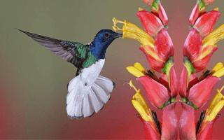 Birdwatching tour in San Gerardo de Dota