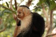 Naturalist tropical Tour guide