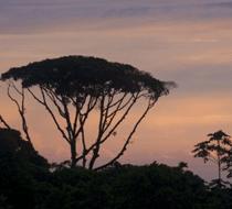 Montezuma Costa Rica waterfalls