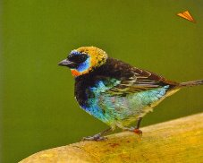 reviews for  Birdwatching Tour Los Cipreses