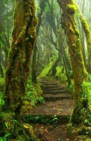 activities for  One day tour Monteverde Cloud Forest Experience Private