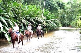 activities for  Combo Horseback Riding and Canopy King Tours
