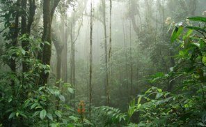 activities for  Biological Reserve Monteverde Guided Tour