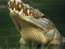 reviews for  Crocodrile Tour Safari in Tarcoles River