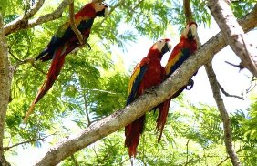reviews for  Palo Verde National Park Tour